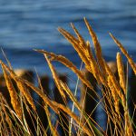 Ostsee-Augenblicke
