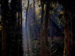 Zauberwald © Mel M.