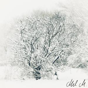 Winterpoem © Mel M.