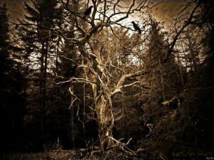 Der verwunschene Baum© Mel M.