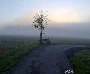 Foggy Morning © Mel M.
