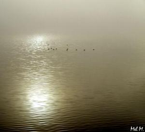 Silence © Mel M.