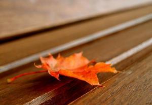 Autmn Leaves © Mel M.