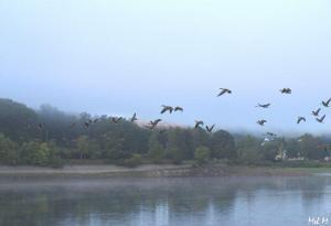 Fly Away © Mel M.